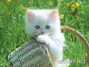 صور قطط جميلة خلفيات قطط روعة اجمل قطط حلوة للخلفيات 2019 00429 300x225 صور قطط جميلة خلفيات قطط روعة اجمل قطط حلوة للخلفيات 2019