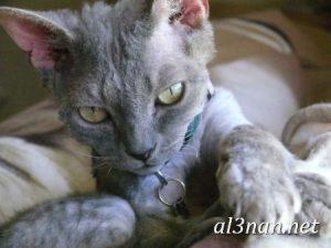 صور قطط جميلة خلفيات قطط روعة اجمل قطط حلوة للخلفيات 2019 00430 300x225 صور قطط جميلة خلفيات قطط روعة اجمل قطط حلوة للخلفيات 2019