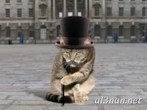 صور قطط جميلة خلفيات قطط روعة اجمل قطط حلوة للخلفيات 2019 00435 300x225 صور قطط جميلة خلفيات قطط روعة اجمل قطط حلوة للخلفيات 2019