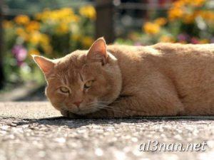 صور-قطط-جميلة-خلفيات-قطط-روعة-اجمل-قطط-حلوة-للخلفيات-2019_00437-300x225 صور قطط جميلة خلفيات قطط روعة اجمل قطط حلوة للخلفيات 2019