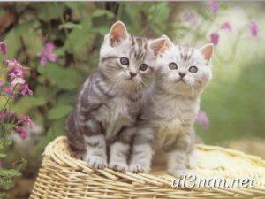صور قطط جميلة خلفيات قطط روعة اجمل قطط حلوة للخلفيات 2019 00440 300x225 صور قطط جميلة خلفيات قطط روعة اجمل قطط حلوة للخلفيات 2019