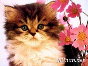 صور قطط جميلة خلفيات قطط روعة اجمل قطط حلوة للخلفيات 2019 00441 300x225 صور قطط جميلة خلفيات قطط روعة اجمل قطط حلوة للخلفيات 2019