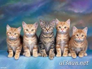 صور قطط جميلة خلفيات قطط روعة اجمل قطط حلوة للخلفيات 2019 00442 300x225 صور قطط جميلة خلفيات قطط روعة اجمل قطط حلوة للخلفيات 2019