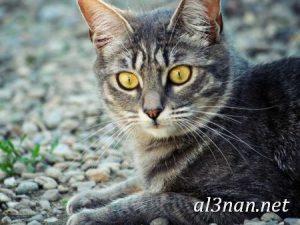 صور قطط جميلة خلفيات قطط روعة اجمل قطط حلوة للخلفيات 2019 00446 300x225 صور قطط جميلة خلفيات قطط روعة اجمل قطط حلوة للخلفيات 2019