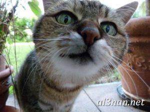 صور-قطط-جميلة-خلفيات-قطط-روعة-اجمل-قطط-حلوة-للخلفيات-2019_00447-300x225 صور قطط جميلة خلفيات قطط روعة اجمل قطط حلوة للخلفيات 2019