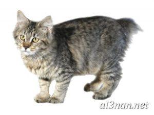صور-قطط-جميلة-خلفيات-قطط-روعة-اجمل-قطط-حلوة-للخلفيات-2019_00449-300x225 صور قطط جميلة خلفيات قطط روعة اجمل قطط حلوة للخلفيات 2019