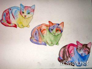 صور قطط جميلة خلفيات قطط روعة اجمل قطط حلوة للخلفيات 2019 00453 300x225 صور قطط جميلة خلفيات قطط روعة اجمل قطط حلوة للخلفيات 2019