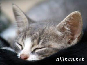 صور قطط جميلة خلفيات قطط روعة اجمل قطط حلوة للخلفيات 2019 00460 300x225 صور قطط جميلة خلفيات قطط روعة اجمل قطط حلوة للخلفيات 2019