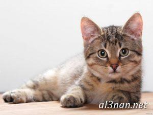 صور-قطط-جميلة-خلفيات-قطط-روعة-اجمل-قطط-حلوة-للخلفيات-2019_00462-300x225 صور قطط جميلة خلفيات قطط روعة اجمل قطط حلوة للخلفيات 2019