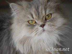 صور-قطط-جميلة-خلفيات-قطط-روعة-اجمل-قطط-حلوة-للخلفيات-2019_00464-300x225 صور قطط جميلة خلفيات قطط روعة اجمل قطط حلوة للخلفيات 2019