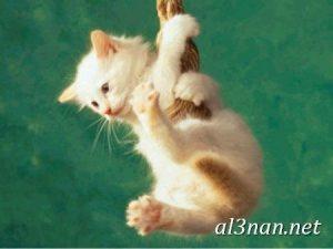 صور قطط جميلة خلفيات قطط روعة اجمل قطط حلوة للخلفيات 2019 00468 300x225 صور قطط جميلة خلفيات قطط روعة اجمل قطط حلوة للخلفيات 2019