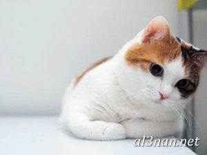 صور قطط جميلة خلفيات قطط روعة اجمل قطط حلوة للخلفيات 2019 00470 300x225 صور قطط جميلة خلفيات قطط روعة اجمل قطط حلوة للخلفيات 2019