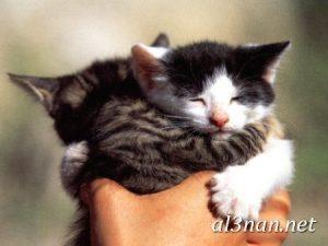 صور قطط جميلة خلفيات قطط روعة اجمل قطط حلوة للخلفيات 2019 00474 300x225 صور قطط جميلة خلفيات قطط روعة اجمل قطط حلوة للخلفيات 2019