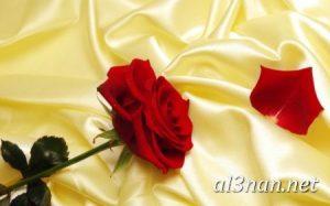 صور-ورد-2019-hd-احلي-الوان-ورد-باقات-زهور-جميلة_00365-300x187 صور ورد طبيعي, صور ورد ابيض, صور ورد جوري احمر, صور ورد جوري