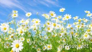 صور-ورد-2019-hd-احلي-الوان-ورد-باقات-زهور-جميلة_00367-300x169 صور ورد طبيعي, صور ورد ابيض, صور ورد جوري احمر, صور ورد جوري
