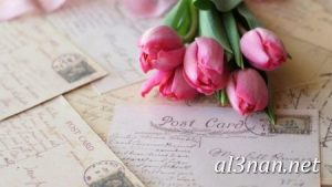 صور-ورد-2019-hd-احلي-الوان-ورد-باقات-زهور-جميلة_00368-300x169 صور ورد طبيعي, صور ورد ابيض, صور ورد جوري احمر, صور ورد جوري