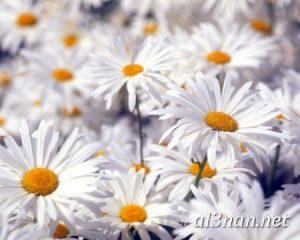 صور-ورد-2019-hd-احلي-الوان-ورد-باقات-زهور-جميلة_00369-300x240 صور ورد طبيعي, صور ورد ابيض, صور ورد جوري احمر, صور ورد جوري