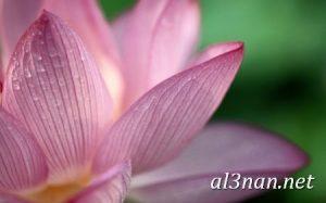 صور-ورد-2019-hd-احلي-الوان-ورد-باقات-زهور-جميلة_00371-300x187 صور ورد طبيعي, صور ورد ابيض, صور ورد جوري احمر, صور ورد جوري