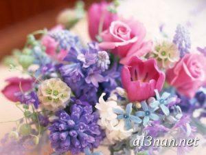 صور-ورد-2019-hd-احلي-الوان-ورد-باقات-زهور-جميلة_00372-300x225 صور ورد طبيعي, صور ورد ابيض, صور ورد جوري احمر, صور ورد جوري