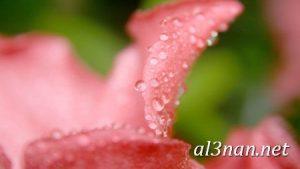 صور-ورد-2019-hd-احلي-الوان-ورد-باقات-زهور-جميلة_00373-300x169 صور ورد طبيعي, صور ورد ابيض, صور ورد جوري احمر, صور ورد جوري