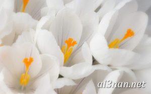 صور-ورد-2019-hd-احلي-الوان-ورد-باقات-زهور-جميلة_00374-300x187 صور ورد طبيعي, صور ورد ابيض, صور ورد جوري احمر, صور ورد جوري