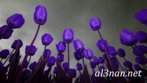 -ورد-2019-hd-احلي-الوان-ورد-باقات-زهور-جميلة_00380-300x169 صور ورد طبيعي, صور ورد ابيض, صور ورد جوري احمر, صور ورد جوري