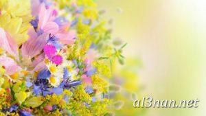 صور-ورد-2019-hd-احلي-الوان-ورد-باقات-زهور-جميلة_00381-300x169 صور ورد طبيعي, صور ورد ابيض, صور ورد جوري احمر, صور ورد جوري