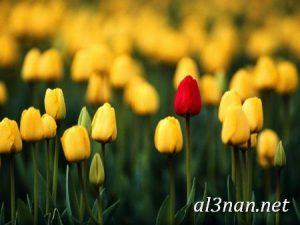 -ورد-2019-hd-احلي-الوان-ورد-باقات-زهور-جميلة_00382-300x225 صور ورد طبيعي, صور ورد ابيض, صور ورد جوري احمر, صور ورد جوري