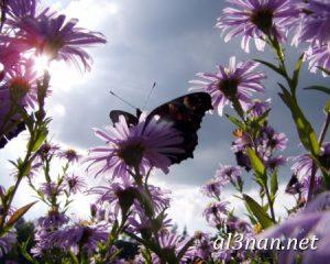 صور-ورد-2019-hd-احلي-الوان-ورد-باقات-زهور-جميلة_00385-300x240 صور ورد طبيعي, صور ورد ابيض, صور ورد جوري احمر, صور ورد جوري