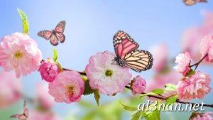 صور-ورد-2019-hd-احلي-الوان-ورد-باقات-زهور-جميلة_00386-300x169 صور ورد طبيعي, صور ورد ابيض, صور ورد جوري احمر, صور ورد جوري