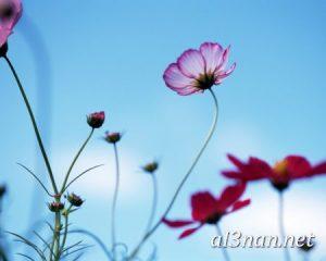 صور-ورد-2019-hd-احلي-الوان-ورد-باقات-زهور-جميلة_00389-300x240 صور ورد طبيعي, صور ورد ابيض, صور ورد جوري احمر, صور ورد جوري
