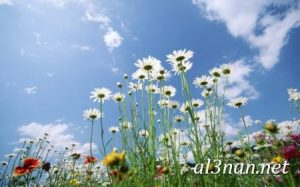 صور-ورد-2019-hd-احلي-الوان-ورد-باقات-زهور-جميلة_00390-300x187 صور ورد طبيعي, صور ورد ابيض, صور ورد جوري احمر, صور ورد جوري