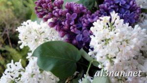 صور-ورد-2019-hd-احلي-الوان-ورد-باقات-زهور-جميلة_00391-300x169 صور ورد طبيعي, صور ورد ابيض, صور ورد جوري احمر, صور ورد جوري