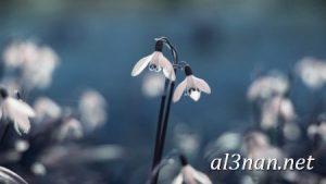 صور-ورد-2019-hd-احلي-الوان-ورد-باقات-زهور-جميلة_00393-300x169 صور ورد طبيعي, صور ورد ابيض, صور ورد جوري احمر, صور ورد جوري