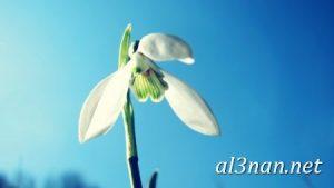 صور-ورد-2019-hd-احلي-الوان-ورد-باقات-زهور-جميلة_00394-300x169 صور ورد طبيعي, صور ورد ابيض, صور ورد جوري احمر, صور ورد جوري