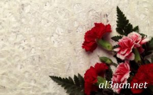 صور-ورد-2019-hd-احلي-الوان-ورد-باقات-زهور-جميلة_00395-300x187 صور ورد طبيعي, صور ورد ابيض, صور ورد جوري احمر, صور ورد جوري