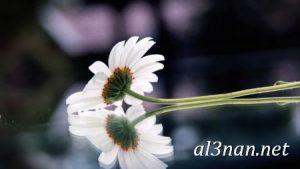 -ورد-2019-hd-احلي-الوان-ورد-باقات-زهور-جميلة_00397-300x169 صور ورد طبيعي, صور ورد ابيض, صور ورد جوري احمر, صور ورد جوري