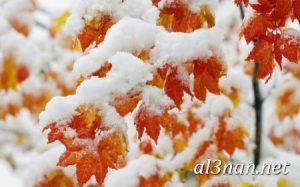-ورد-2019-hd-احلي-الوان-ورد-باقات-زهور-جميلة_00398-300x187 صور ورد طبيعي, صور ورد ابيض, صور ورد جوري احمر, صور ورد جوري