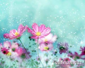 صور-ورد-2019-hd-احلي-الوان-ورد-باقات-زهور-جميلة_00399-300x240 صور ورد طبيعي, صور ورد ابيض, صور ورد جوري احمر, صور ورد جوري