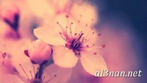 صور-ورد-2019-hd-احلي-الوان-ورد-باقات-زهور-جميلة_00400-300x169 صور ورد طبيعي, صور ورد ابيض, صور ورد جوري احمر, صور ورد جوري