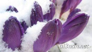 -ورد-2019-hd-احلي-الوان-ورد-باقات-زهور-جميلة_00401-300x169 صور ورد طبيعي, صور ورد ابيض, صور ورد جوري احمر, صور ورد جوري