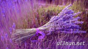 صور-ورد-2019-hd-احلي-الوان-ورد-باقات-زهور-جميلة_00402-300x169 صور ورد طبيعي, صور ورد ابيض, صور ورد جوري احمر, صور ورد جوري