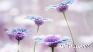 صور-ورد-2019-hd-احلي-الوان-ورد-باقات-زهور-جميلة_00403-300x169 صور ورد طبيعي, صور ورد ابيض, صور ورد جوري احمر, صور ورد جوري