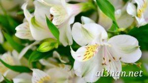 صور-ورد-2019-hd-احلي-الوان-ورد-باقات-زهور-جميلة_00404-300x169 صور ورد طبيعي, صور ورد ابيض, صور ورد جوري احمر, صور ورد جوري