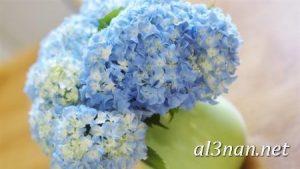 صور-ورد-2019-hd-احلي-الوان-ورد-باقات-زهور-جميلة_00406-300x169 صور ورد طبيعي, صور ورد ابيض, صور ورد جوري احمر, صور ورد جوري