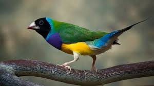 download 1 1 300x168 صور طيور  عالية الجودةHD خلفيات و رمزيات طيور منوعة جميلة