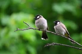 download 11 صور طيور  عالية الجودةHD خلفيات و رمزيات طيور منوعة جميلة