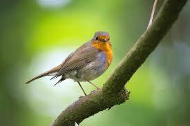 download 12 صور طيور  عالية الجودةHD خلفيات و رمزيات طيور منوعة جميلة