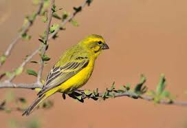 download 13 صور طيور  عالية الجودةHD خلفيات و رمزيات طيور منوعة جميلة