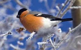 download 14 صور طيور  عالية الجودةHD خلفيات و رمزيات طيور منوعة جميلة